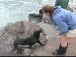 Fur seals enjoying their new home at New England Aquarium